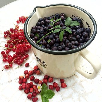 Berry, Organic Blueberries, Nature, Wild Blueberries