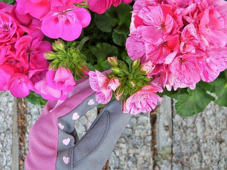 Geranium, Pink, Gloves, Garden, Flower Care, Blossom