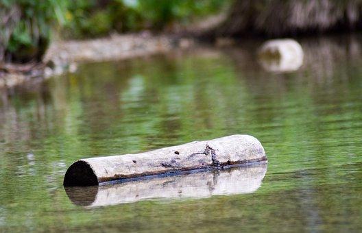 Tree Stump, Lake, Water, Log, Landscape, Nature, Tree