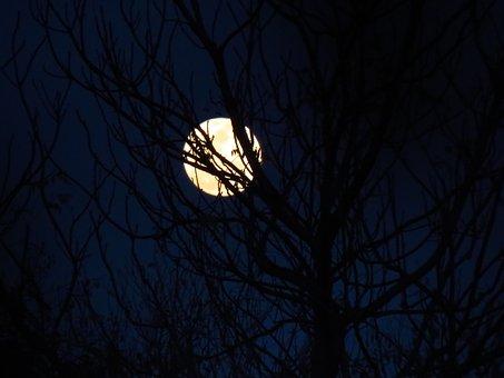 Moon, Moonlit, Blue Sky, Night Sky, Moon And Tree