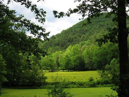 Mountain, Trees, Shrubs, Nature, Meadow, Landscape