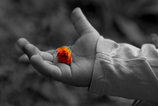 Hand, Flower, Palm, Child