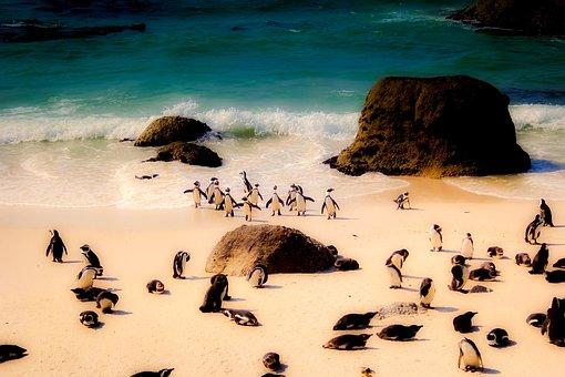 South Africa, Penguins, Wildlife, Birds, Cute, Beach