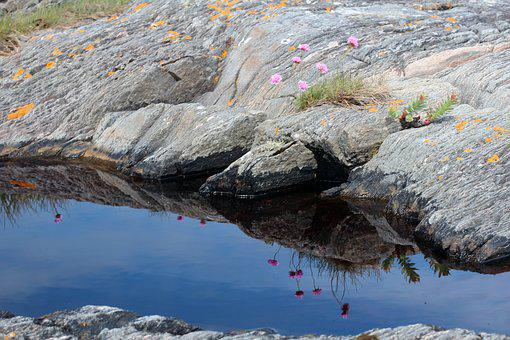 Stone, Puddle, Flower, Reflect, Mirroring, Reflection