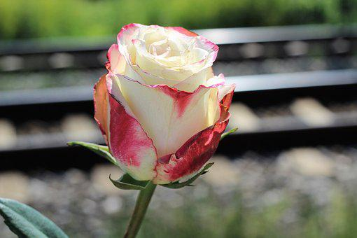White Red Rose, Railway, Stop Teenager Suicide