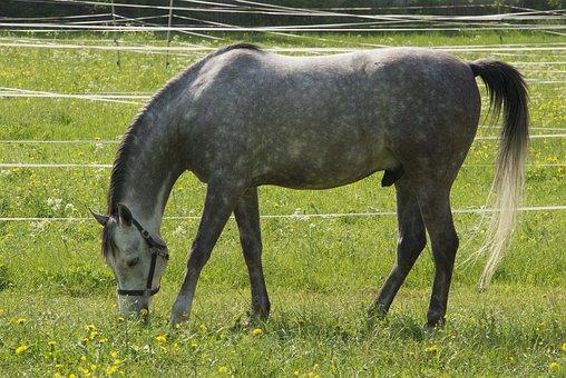 Horse, Animals, Reiterhof, Animal World, Equestrian