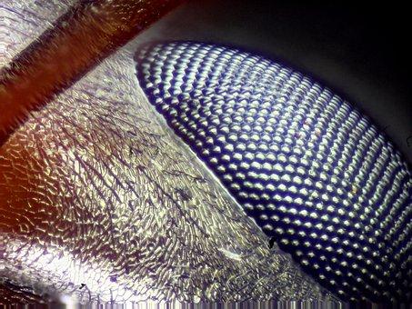 Eye, Eye Close-up, Bug Eye, Ant Eye, Macro, Wildlife