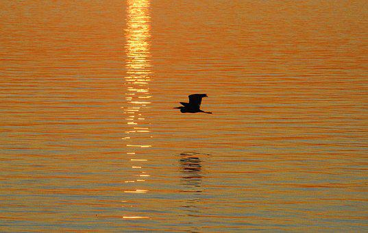 Heron, Silhouette, Bird, Nature, Flying, Shape, Water