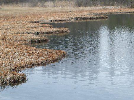 Pond, Lake, Autumn Forest, Mirroring, Nature Reserve