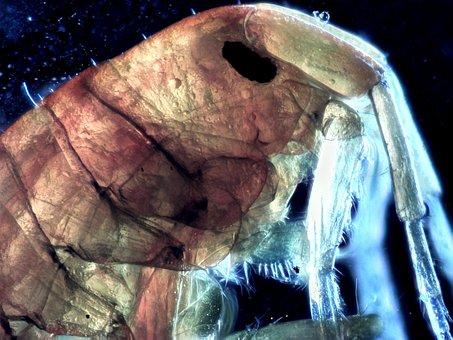 Microscopy, Photo-microscopy, Closeup, Pond Scum