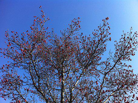Crown, Sky, Spring