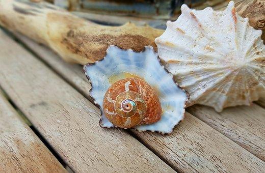 Shell, Snail, Snail Shell, Housing, Spiral, Decorative