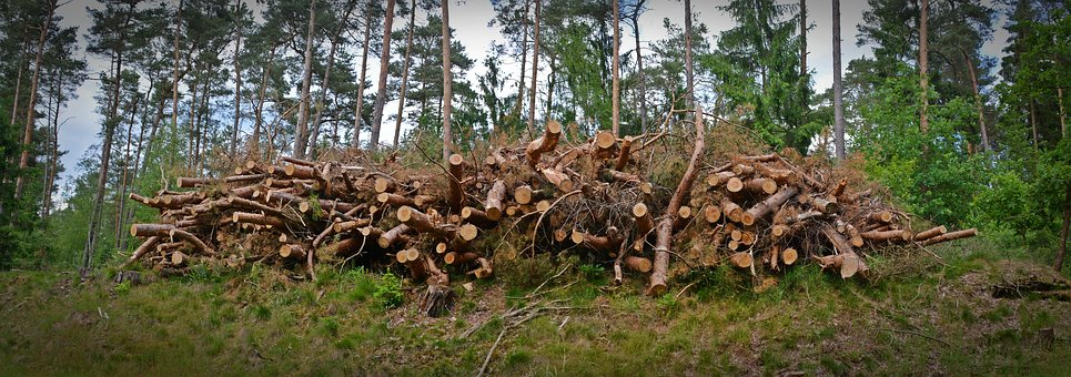 Wood, Holzstapel, Timber Industry, Strains, Timber