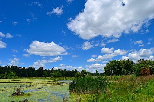 Swamp, Reeds, Clouds, Sky, Blue, Nature, Landscape, Sun