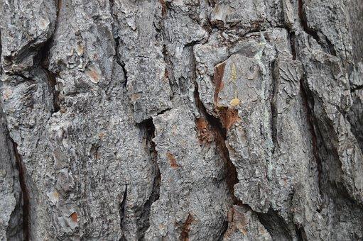 Trunk, Wood, Bark, Texture, Pine, Tree, Nature