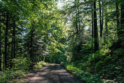 Forest Road, Forest, Tree, Green, Summer, The Sun