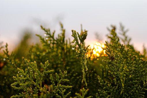 Nature, Sunset, Light, Nightfall, Summer, Yellow