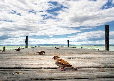Bird, Albufera, Jetty, Heaven, Valencia