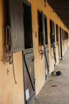 Barn, Horse, Animal, Room, Concrete, Photo, Brown, Ride