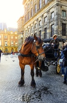 Amsterdam, Horse, Carriage, Taxi, Transportation