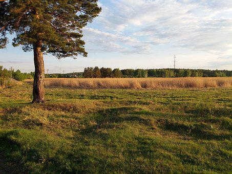Tree, Field, Reed, Grass, Firewood, Landscape, Nature