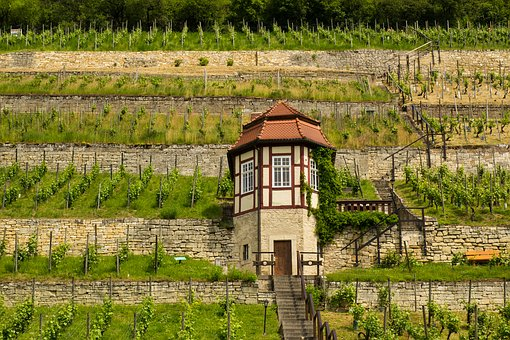 Freyburg Unstrut, Wine, Wine Growing Area