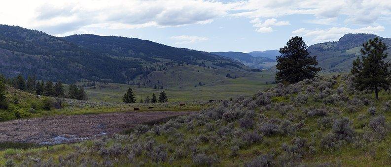 Landscape, Arid, Grassland, Pasture, Grazing, Valley