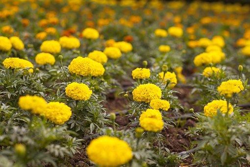 Flower, Yellow, Macro, Flower Picture, Landscape, Wild