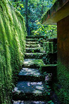 Moss, Step, Stone, Green, Nature, Old, Travel, Garden