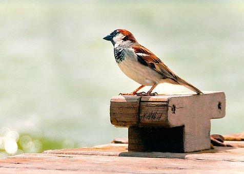 Bird, Nature, Albufera, Valencia, Animals, Fauna