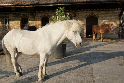 Horse, White, Mold, White Horse, Nature, Horse Head