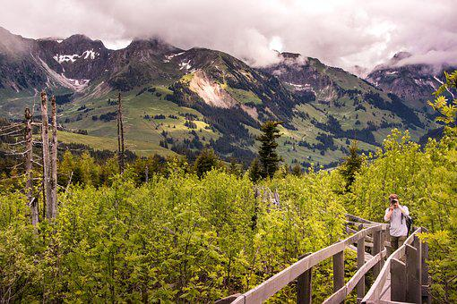 Boardwalk, Gäggersteg, Nature, Lothar