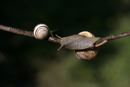 Snails, Casey, Hooked, Shell, Horns