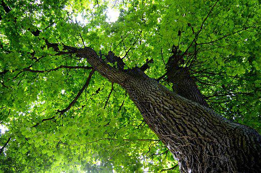 Age, Crown, Old, Nature, Forest, Sky, Tree, Light, Log