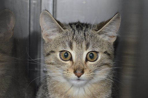 Animal Welfare, Erika, Tiger Cat, Homeless Cat, Kitten