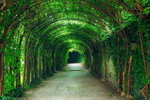 Green, Tunnel, Natural, Garden, Salzburg