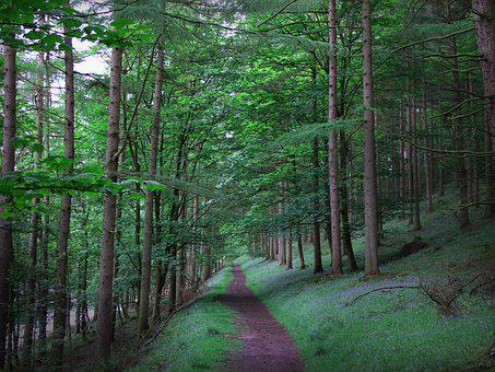 Forest, Adventure, Quest, Nature, Travel, Hiking