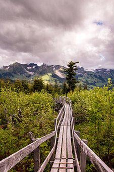Boardwalk, Gäggersteg, Nature, Lothar, Switzerland