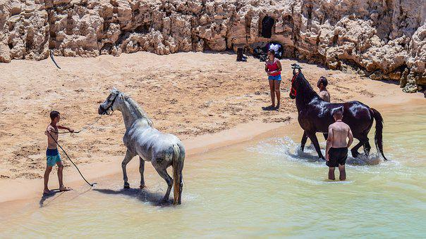 Horses, Taking Bath, Bathing, Beach, Refreshing, Heat