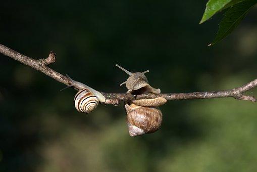 Snails, Casey, Hooked, Rain, Shell, Horns