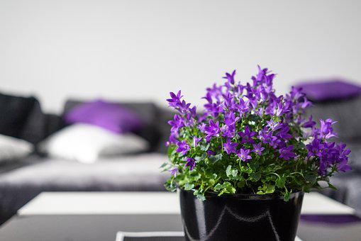 Violet, Interior, Setup, Flowers, Living Room