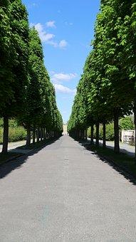 Avenue, Trees, Tree Lined Avenue, Road, Park, Away