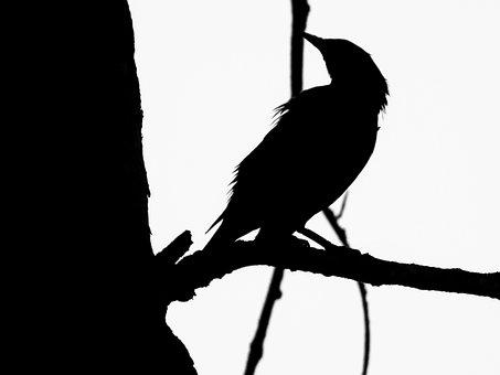 Bird, Art, Silhouette, Black, Creative, Abstract