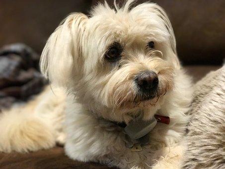 Pet, Dog, Cute, Puppy, Rescue Dog