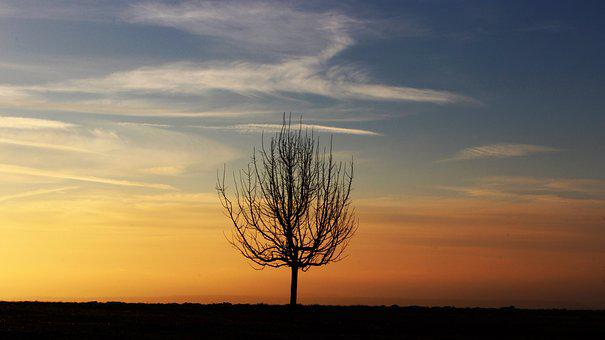 Tree, Morning, Morgenrot, Silhouette, Nature