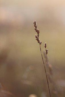 Grass, March, Nature, Sunny, The Background, Vegetation