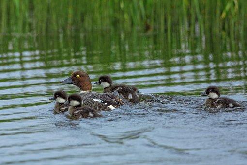 Bird, Parent Child, A, June, Fax The Lake, Mongolia