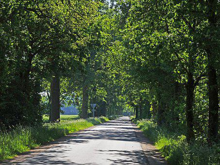 Forest Path In Early Summer, Oak, Avenue, Dirt Track