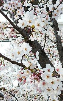 Beoc Flowers, Flowers, Wood, White Flower, Flower Tree