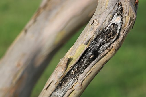 Scar, Tree, Limb, Wood, Trunk, Natural, Nature, Forest